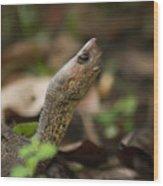 Turtle's Neck  Wood Print