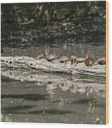 Turtles Sunning On A Log Wood Print