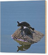 Turtles Tanning Wood Print