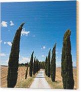 Tuscan Cypress Landscape Wood Print