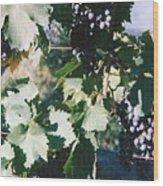 Tuscan Grapes Photograph Wood Print