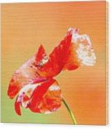 Tuscan Poppy Wood Print