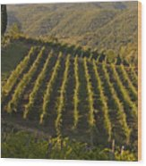 Tuscan Vineyards At Sunset Wood Print
