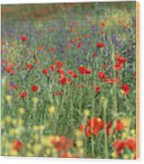 Tuscan Wildflowers Wood Print