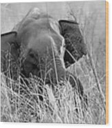 Tusker In The Grass Wood Print