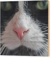 Tuxedo Cat Whiskers And Pink Nose Wood Print