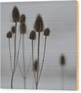 Teasels Wood Print