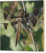 Twelve Spotted Skimmer Dragonfly Wood Print