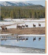 Twice The Elk Wood Print