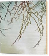Twigs And Winter Sky Two Wood Print