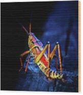 Twilight Grasshopper Wood Print