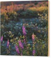 Twilight Lupine Wood Print