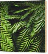Twilight Rainforest Fern  Wood Print