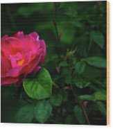 Twilight Rose Wood Print