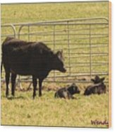 Twin Calves Wood Print