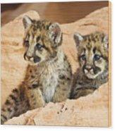 Twin Cougar Kittens Wood Print