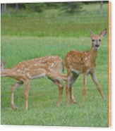 Twin Fawns Playing Wood Print
