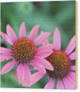 Twin Flowers Wood Print