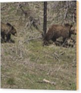 Twin Grizzlies-signed-#3299 Wood Print