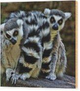 Twin Lemurs Wood Print