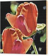 Twin Tulips Wood Print