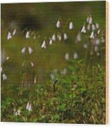 Twinflower Wood Print