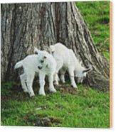 Twins At Play Wood Print
