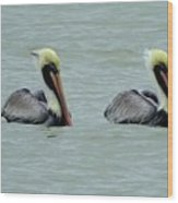 Twins Brown Pelican In Gulf Of Mexico Wood Print
