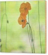 Twins. Orange Poppies Wood Print