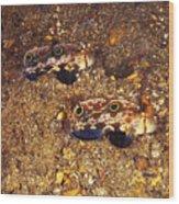 Twinspot Goby Pair , Signigobius Wood Print