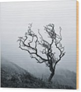 Twisted Wood Print