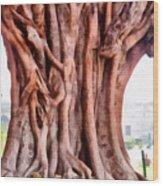 Twisted Gnarled Tree Wood Print
