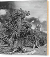 Twisted Old Bristlecone Pine Above Crater Lake - Oregon Wood Print by Christine Till
