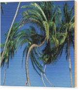 Twisted Palms On The Island Of Trinidad Wood Print