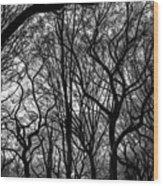 Twisted Trees Wood Print