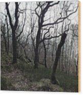 Twisted Woods Wood Print