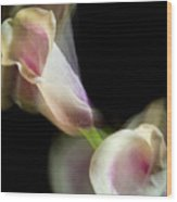 Twisting Cala Lily One Wood Print