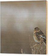 Twite  Wood Print