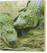 Two Alligators Wood Print by Garry Gay