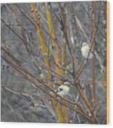 Two American Goldfinch Wood Print