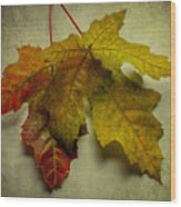 Two Autumn Leaves Wood Print
