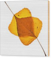 Two Backlit Cottonwood Leaves In Autumn On White Wood Print