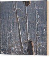Two Bears Up A Tree Wood Print