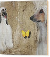 Two Beautiful Afghans Wood Print