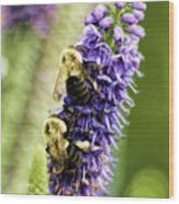 Salvia With Bees Wood Print