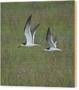 two Black Skimmers in flight Wood Print