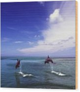 Two Bottlenose Dolphins Wood Print