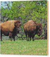 Two Buffalo Standing Wood Print