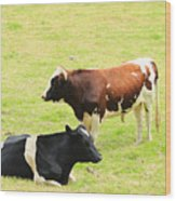 Two Bulls In A Pasture Wood Print