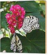 Two Butterflies Wood Print